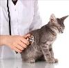 Ветеринарные клиники в Донском
